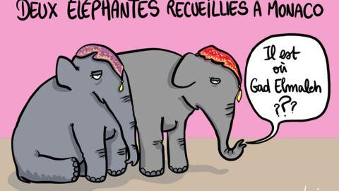 Louison a croqué: Stéphanie de Monaco accueille deux éléphantes sur le Rocher