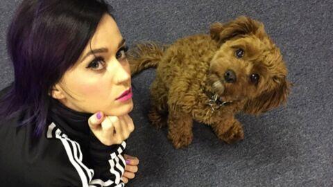 Katy Perry donne malencontreusement son numéro de téléphone à ses fans