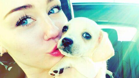 Miley Cyrus: Bean, un nouveau chien dans sa vie