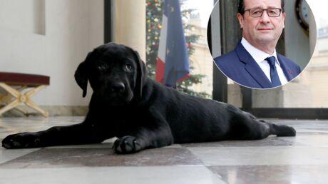Le chien de François Hollande a du mal à s'acclimater à l'Elysée et le fait sentir
