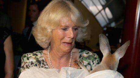 PHOTOS Camilla et le prince Charles sous le charme d'un kangourou