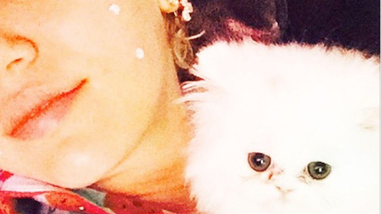 Miley Cyrus adopte un chaton et lui crée un compte Instagram