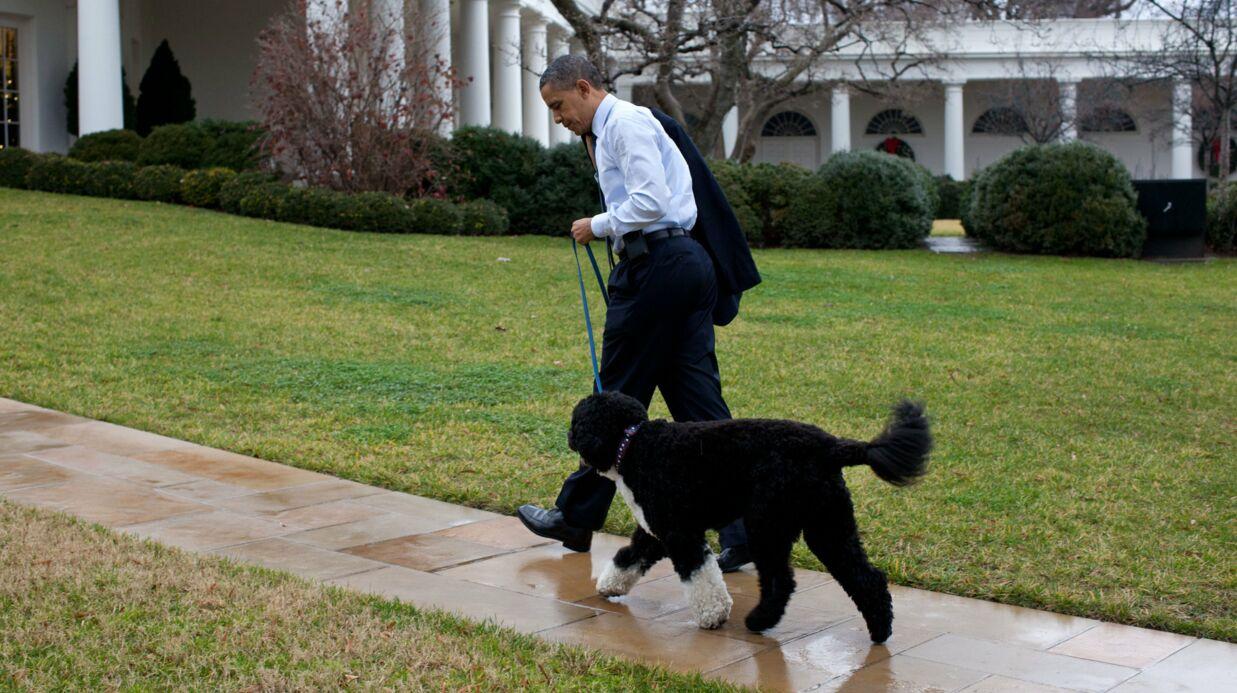 Barack Obama: l'un de ses chiens a mordu une jeune fille au visage à la Maison-Blanche