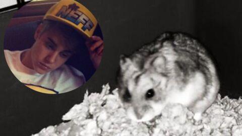 Pac, le hamster de Justin Bieber, est mort