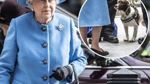 PHOTOS Le sac à main d'Elizabeth II contrôlé par un chien des douanes lors d'une visite officielle