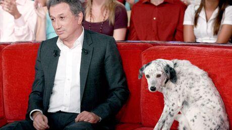 Michel Drucker: sa jeune chienne est morte