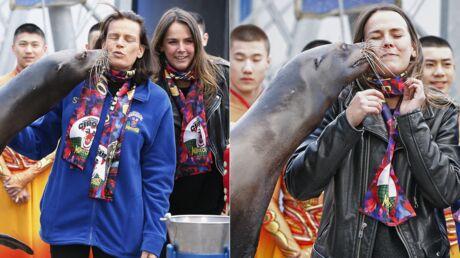 PHOTOS Stéphanie de Monaco et sa fille Pauline: instant tendresse… avec une otarie