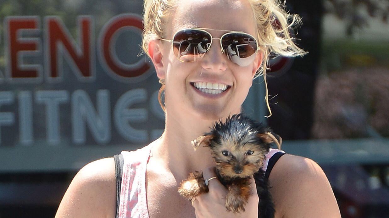 En un an, Britney Spears a dépensé 20 000 euros… pour ses chiens