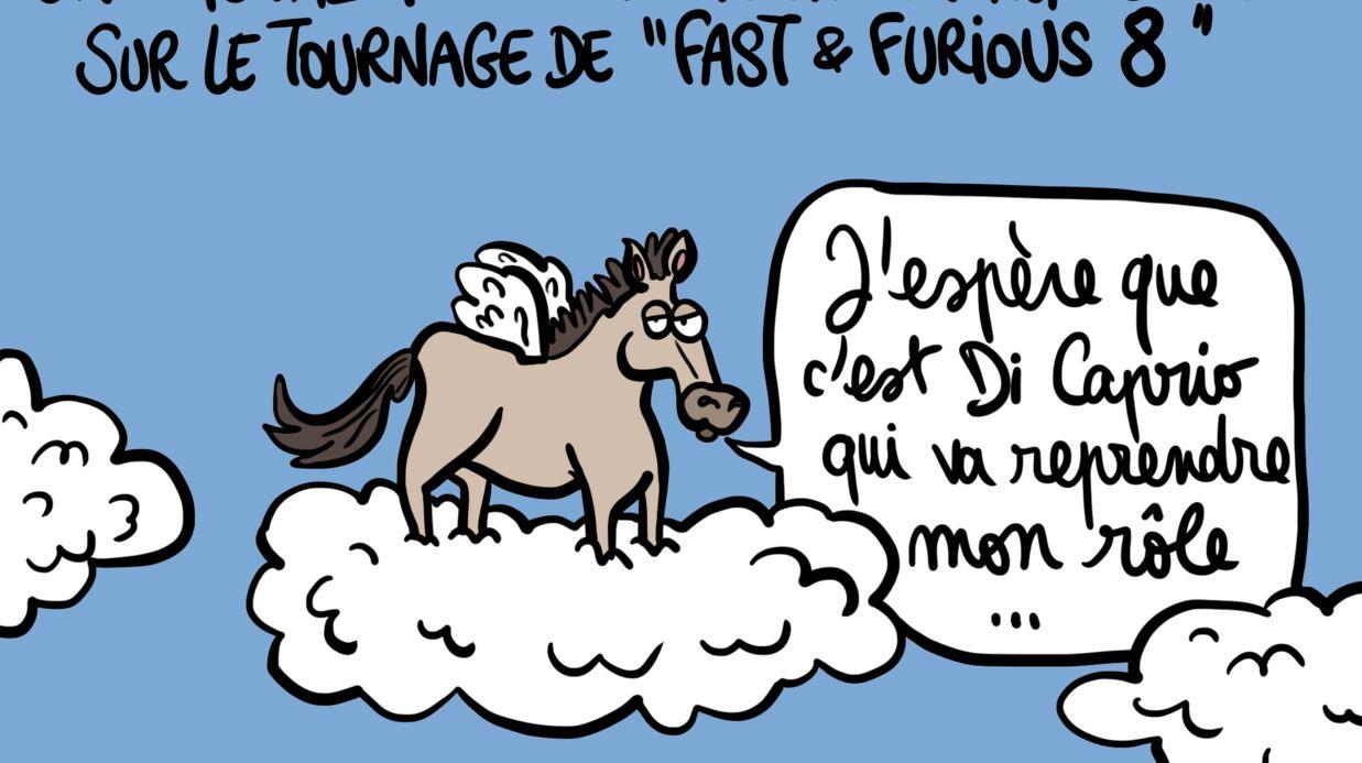 Louison a croqué: un cheval meurt en marge du tournage de Fast & Furious 8, percuté par un iceberg volant