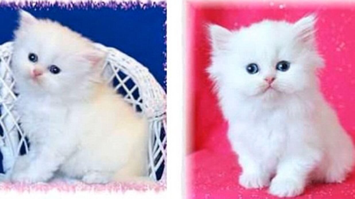 A défaut d'avoir un bébé, Kim Kardashian adopte un chaton