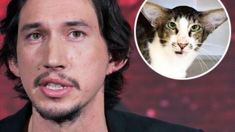 PHOTO Un chat trouve son maître grâce à sa ressemblance avec un héros de Star Wars