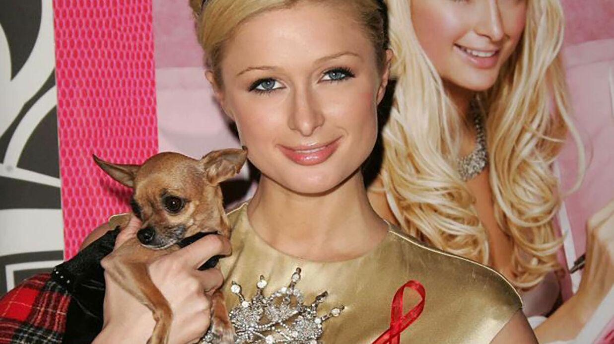 Tinkerbell, le chihuahua de Paris Hilton est mort