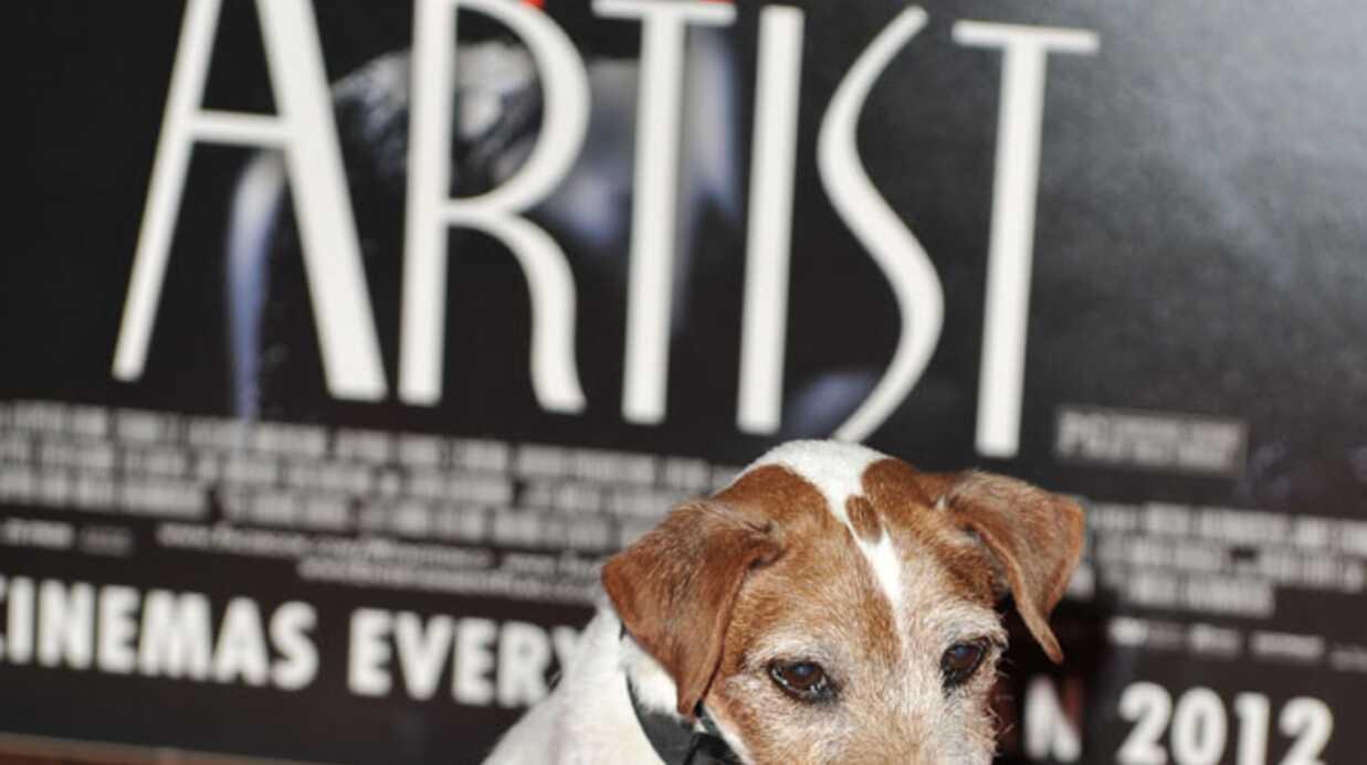The Artist: le chien de Jean Dujardin bientôt primé?