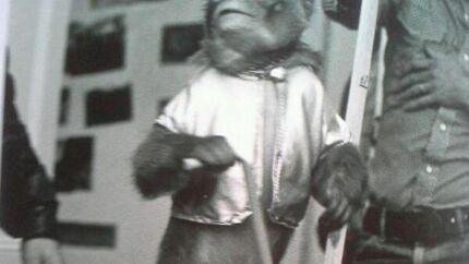 Un singe devait jouer le rôle de Maître Yoda, dans Star Wars: l'Empire contre-attaque