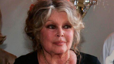 Brigitte Bardot a retrouvé sa chatte égarée