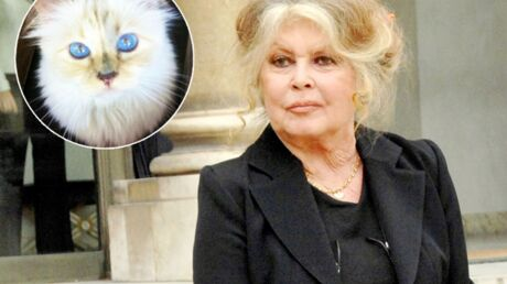Brigitte Bardot écrit une lettre à… la chatte de Karl Lagerfeld