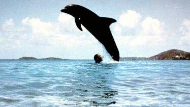 «Un dauphin inoubliable»