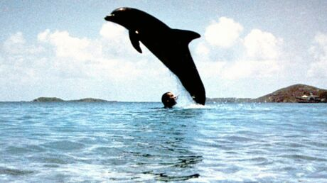 Jean-Marc Barr ému par la mort du dauphin Joséphine