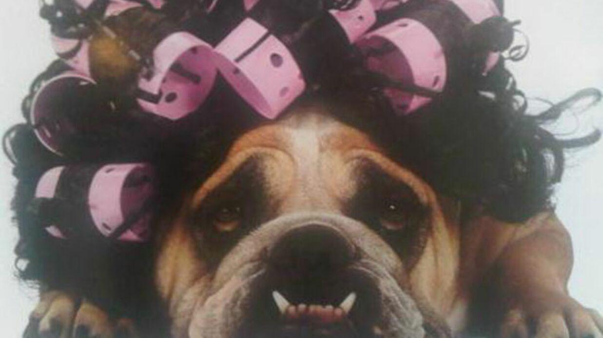 Victoria Beckham: l'hilarant album photos de ses chiens