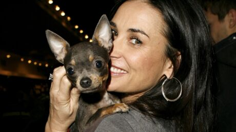 Demi Moore offre des séances d'acupuncture à 670 euros à son chihuahua