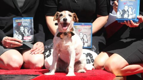 PHOTOS The Artist : le chien Uggie laisse ses empreintes à Hollywood