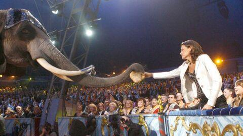 Stéphanie de Monaco se porte au secours de deux éléphantes