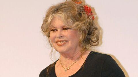 Brigitte Bardot est soulagée, les éléphantes en danger sont épargnées