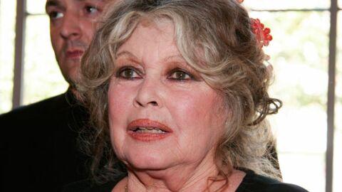Brigitte Bardot promet 600 euros à celui qui retrouvera sa chatte