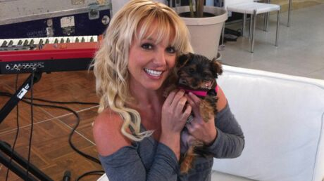 PHOTO Britney Spears a une nouvelle petite chienne
