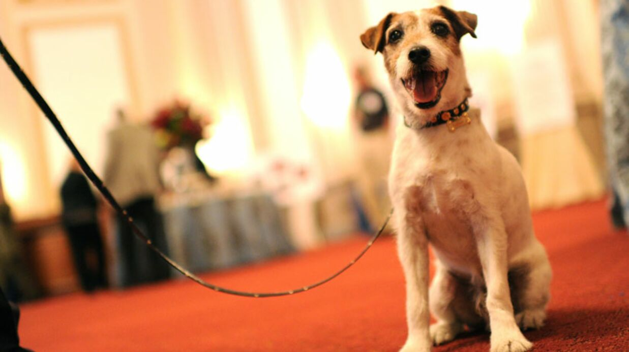 Uggie, le chien de The Artist, sort ses mémoires