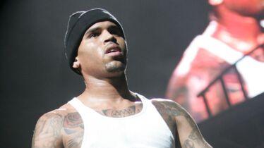 Qui veut un chiot Chris Brown?