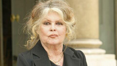 Brigitte Bardot rassurée pour sa chatte après l'appel à témoin