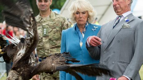 PHOTOS Charles et Camilla très surpris face à un aigle royal incontrôlable