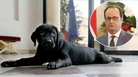 François Hollande: que deviendra Philae, sa chienne labrador, quand il quittera l'Elysée?