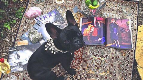 PHOTOS Folle de son chien, Lady Gaga crée une ligne de vêtements canins en son honneur