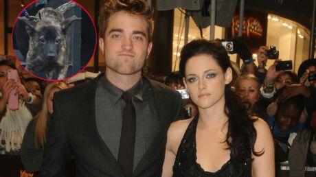Kristen Stewart et Robert Pattinson: qui aura la garde (du chien)?