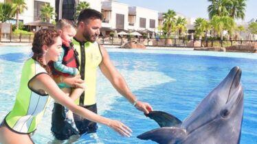 Le dauphin de la discorde