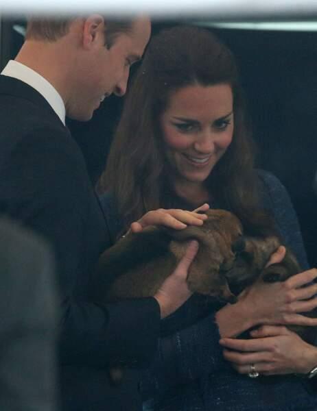 Instant câlin avec un bébé berger allemand dans le centre d'entraînement canin