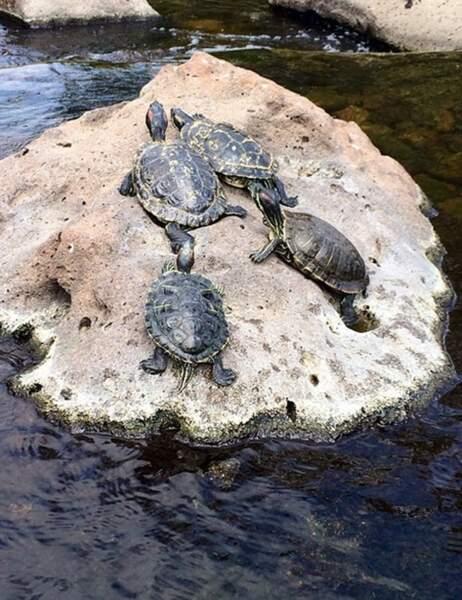 Oh les jolies tortues !