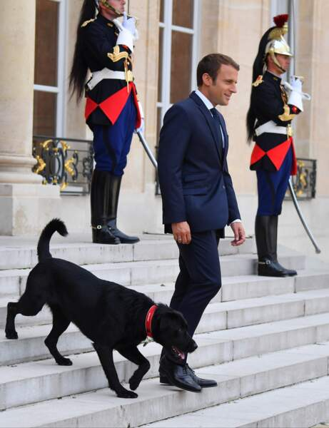 Nemo, le chien de Brigitte et Emmanuel Macron fait ses premiers pas devant les photographes à l'Elysée