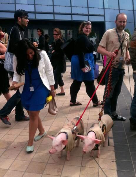 Des cochons sur la Croisette