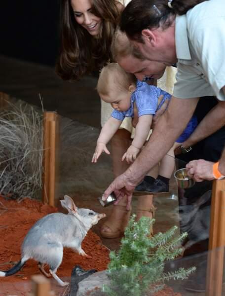 Il a rencontré des animaux