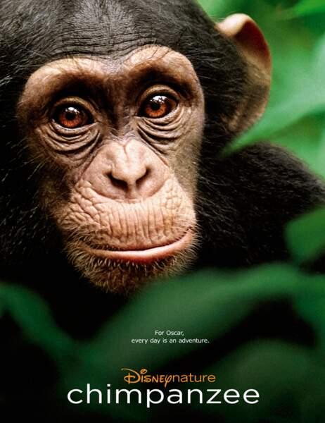 L'affiche de Chimpanzés, le dernier film de Disney Nature