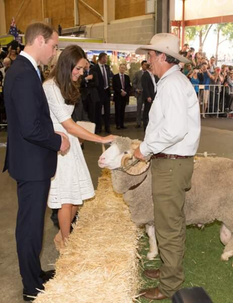 Kate et William admirent un bélier