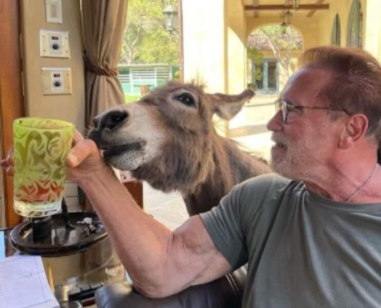 Arnold Schwarzenegger et son âne Lulu
